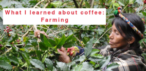 wr-amavida-blog-what-i-learned-about-coffee-985x480
