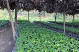 Sustainable Burundi Coffee from the Nemba Coffee Cooperative