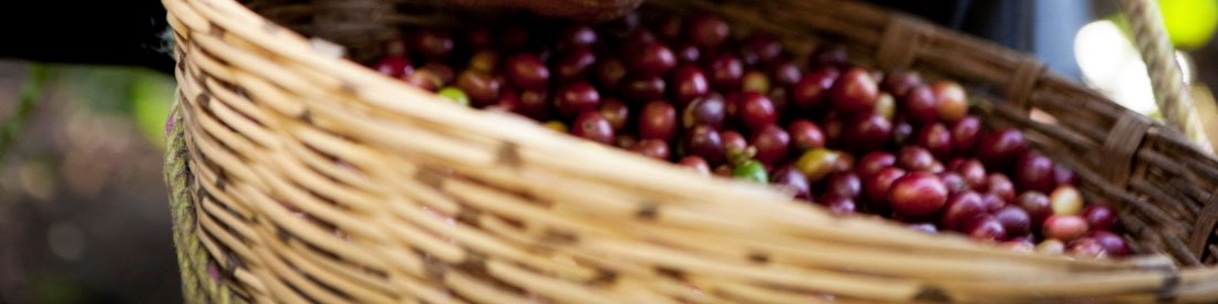Basket of the Best Single Origin Coffee