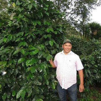 Honduras Coffee Finca Cual Bicicleta produced by Oscar Omar Alonzo of Cafe Californeo