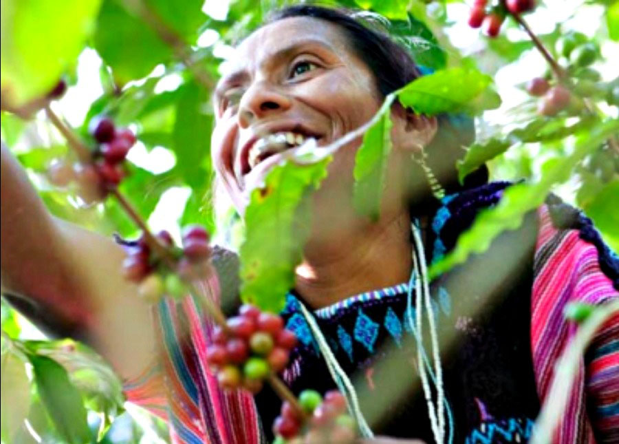 Woman in coffee harvesting for the best organic coffee brands.
