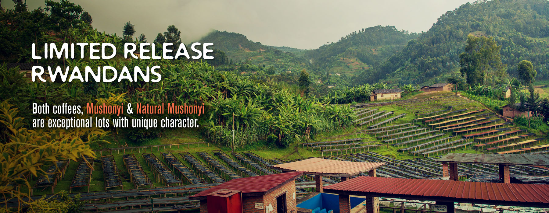 "Limited Release Rwanda Coffee from Mushonyi ""exceptional lots with unique character"""