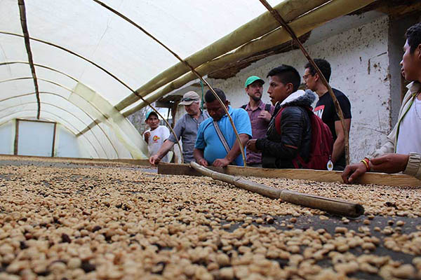 Coffee Cooperative built on Better Trade
