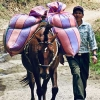Coffee delivered by horse with farmer in Colombia Tierradentro