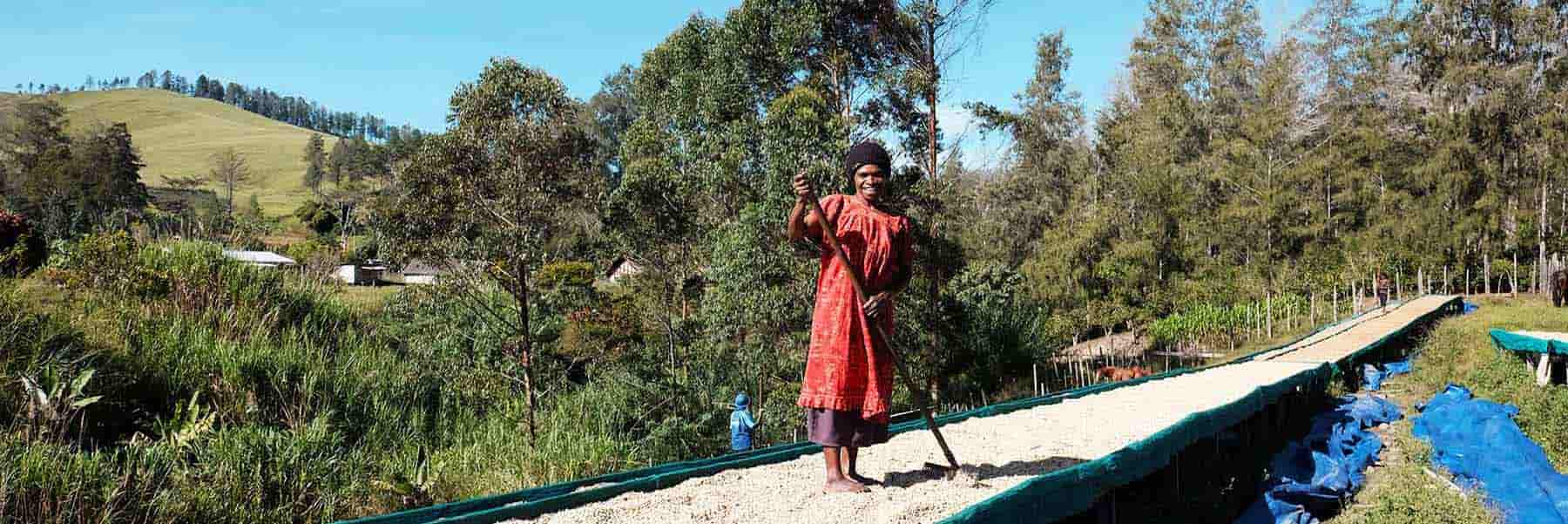 Female coffee producer in red dress with coffee on drying beds at Baroida Estate in Papua New Guinea.