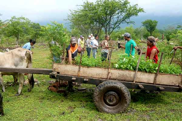 Multiple farmers working in partnership on a reforestation project supported by carbon neutral companies. Seen with coffee plants being taken from a wagon and passed on to be planted.