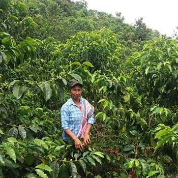 Ilda Mayo on her organic coffee farm in Ecuador. Seen harvesting her micro-lot.
