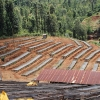 Specialty coffee drying on raised beds high in the mountains at Kenya Kehete