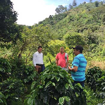 Colombian coffee producers among shade gown microlot on Edith Yasso's farm.