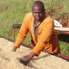 Coffee producer at Gathaithi in Nyeri County, Kenya, processing high quality coffee beans for this limited release