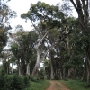 High elevation coffee roads in Ethiopia leading to Genji Calla washing station