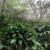 Biodiversity at Montecristo Trifinio, a twi-border national park, and Coffee in El Salvador